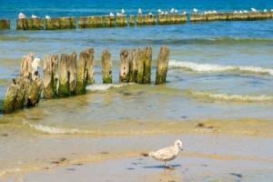 Einen Tag an der Ostsee