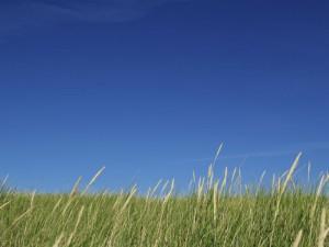 Dünen und blauer Himmel in Kampen