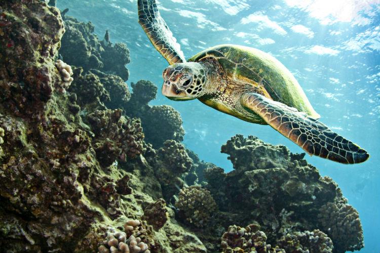 SEA LIFE Timmendorfer Strand - Ausflug in die Unterwasserwelten