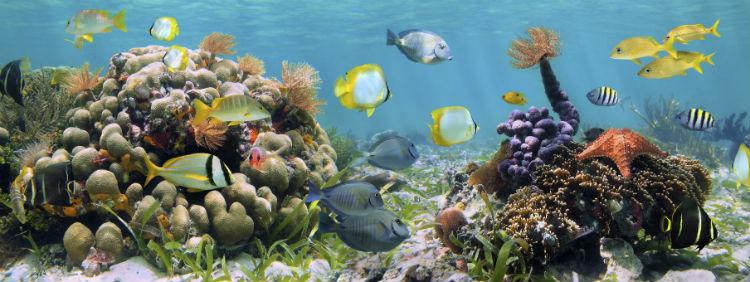 Unterwasserwelt im SEA Life am Timmendorfer Strand