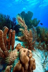 Bonaire Riff