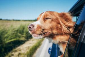 Die 5 besten Städtereisen mit Hund